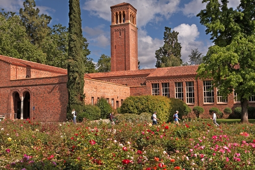 california-state-university-chico-online-masters-nursing-degree